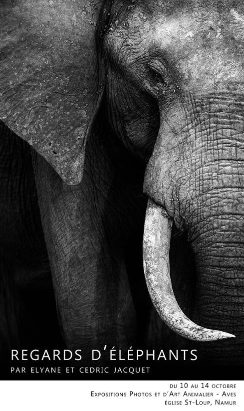 Expo Photo Regards d'éléphants
